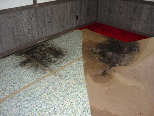 Mold Under Flooring (Photo Credit: Den Garden)